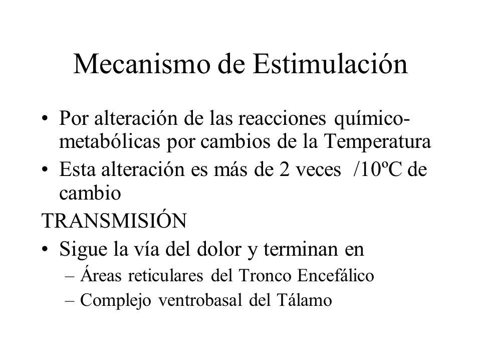 Estimulación de los receptores de Temperatura: Sensación de frío, fresco, indiferente, templado y caliente Muy frío < 10 ºC Fibras de Dolor Frío Entre