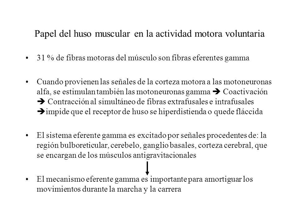 Función Amortiguadora de los reflejos de estiramiento dinámico y estático: Evitar oscilaciones o sacudidas