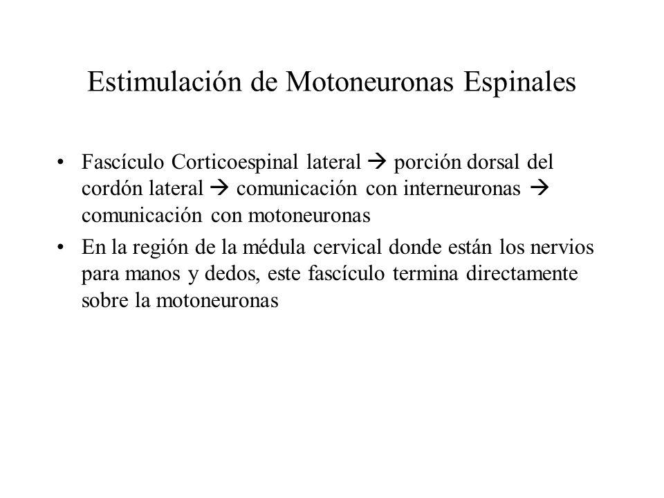 Corteza Motora 1° en la excitación de la ME El Haz corticoespinal se origina de la 5ta. Capa de la columna céls. Piramidales Estas reciben información