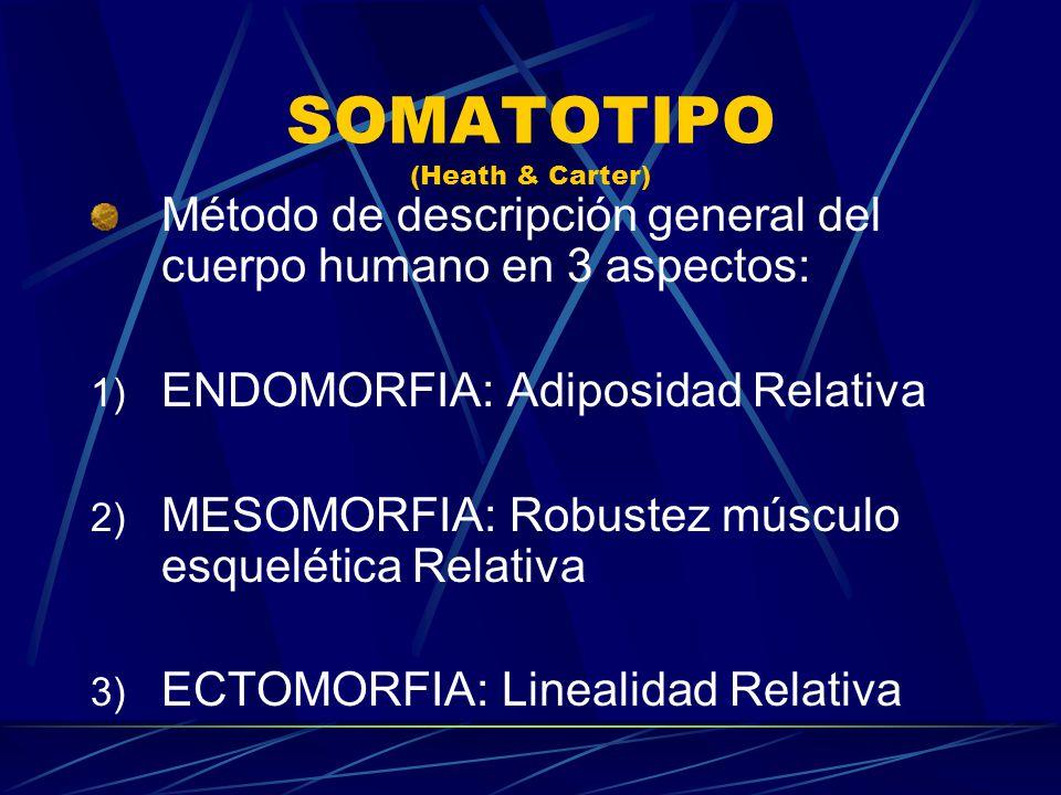 SOMATOTIPO (Heath & Carter) Método de descripción general del cuerpo humano en 3 aspectos: 1) ENDOMORFIA: Adiposidad Relativa 2) MESOMORFIA: Robustez