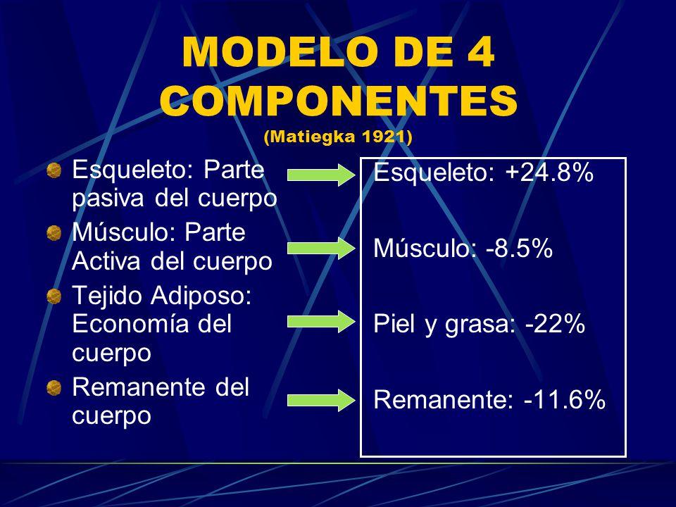MODELO DE 4 COMPONENTES (Matiegka 1921) Esqueleto: Parte pasiva del cuerpo Músculo: Parte Activa del cuerpo Tejido Adiposo: Economía del cuerpo Remane