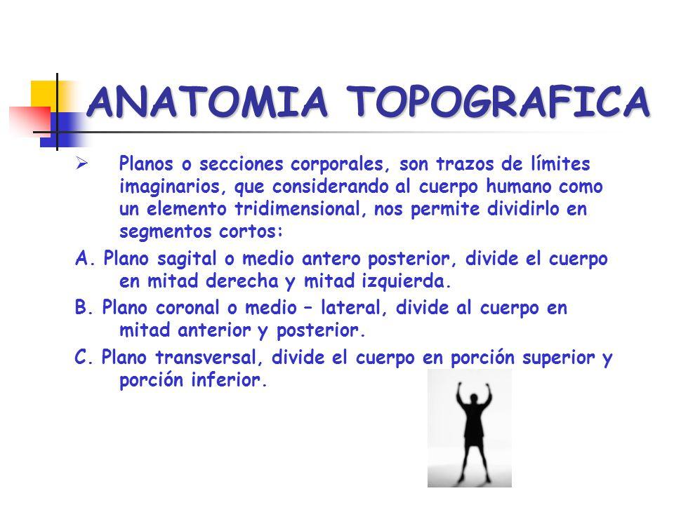 ANATOMIA TOPOGRAFICA Planos o secciones corporales, son trazos de límites imaginarios, que considerando al cuerpo humano como un elemento tridimension