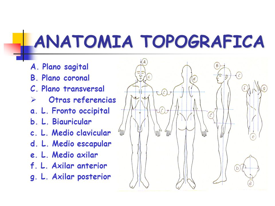 ANATOMIA TOPOGRAFICA A. Plano sagital B. Plano coronal C. Plano transversal Otras referencias a. L. Fronto occipital b. L. Biauricular c. L. Medio cla
