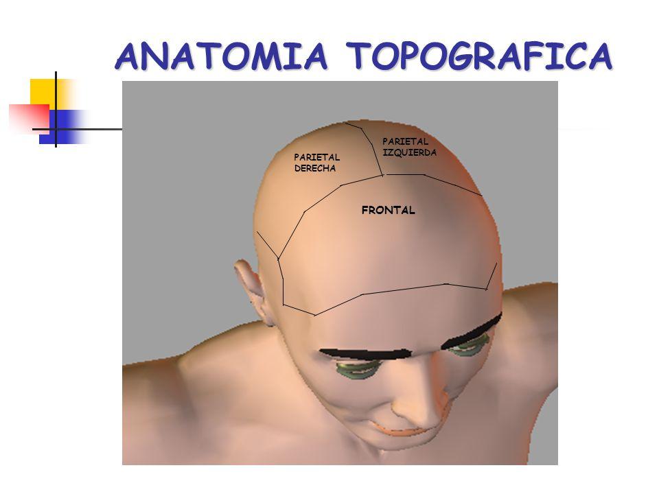 ANATOMIA TOPOGRAFICA PARIETAL DERECHA PARIETAL IZQUIERDA FRONTAL