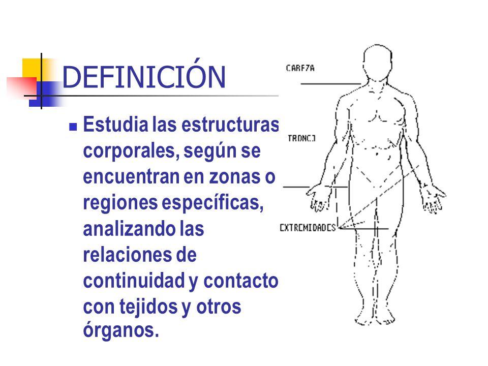 DEFINICIÓN Estudia las estructuras corporales, según se encuentran en zonas o regiones específicas, analizando las relaciones de continuidad y contact
