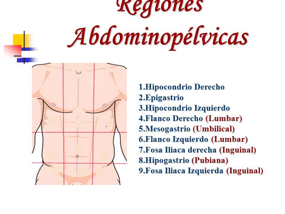 Regiones Abdominopélvicas 1.Hipocondrio Derecho 2.Epigastrio 3.Hipocondrio Izquierdo 4.Flanco Derecho (Lumbar) 5.Mesogastrio (Umbilical) 6.Flanco Izqu