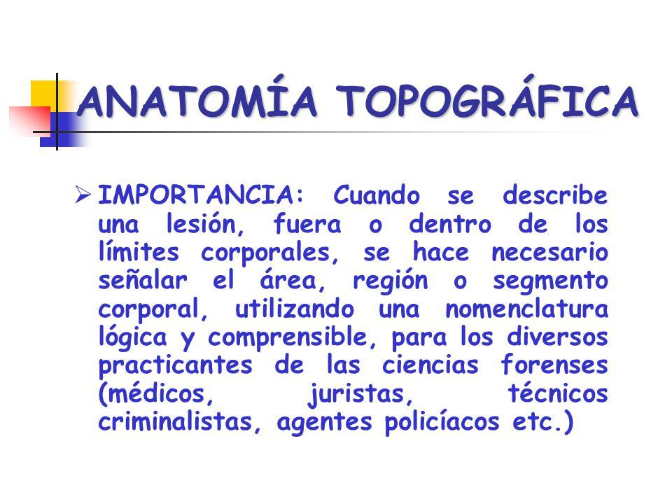 ANATOMÍA TOPOGRÁFICA IMPORTANCIA: Cuando se describe una lesión, fuera o dentro de los límites corporales, se hace necesario señalar el área, región o