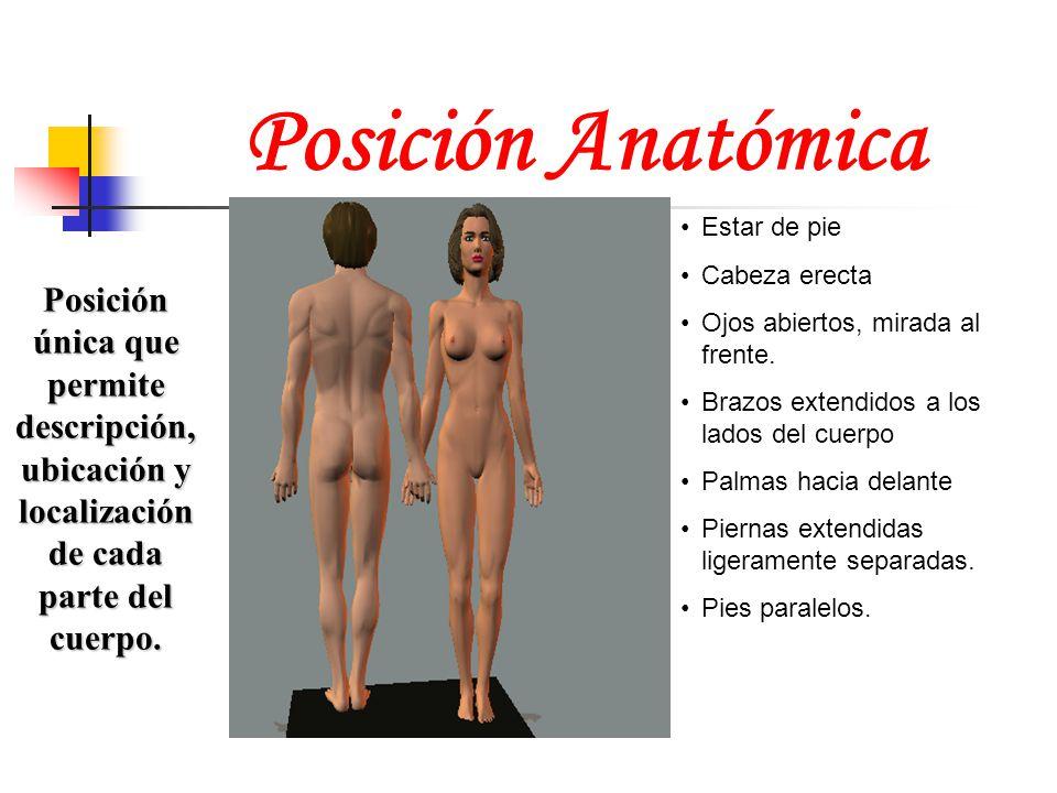 Posición Anatómica Posición única que permite descripción, ubicación y localización de cada parte del cuerpo. Estar de pie Cabeza erecta Ojos abiertos