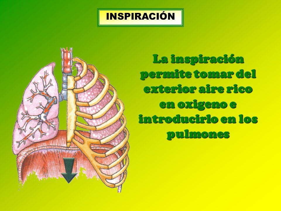 La inspiración permite tomar del exterior aire rico en oxigeno e introducirlo en los pulmones INSPIRACIÓN