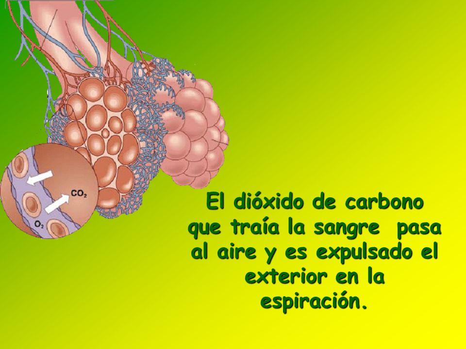 El dióxido de carbono que traía la sangre pasa al aire y es expulsado el exterior en la espiración.
