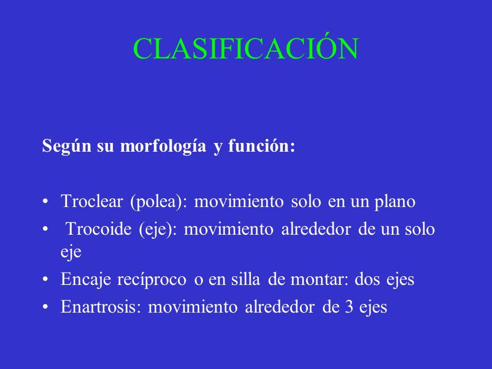 CLASIFICACIÓN Según su morfología y función: Troclear (polea): movimiento solo en un plano Trocoide (eje): movimiento alrededor de un solo eje Encaje