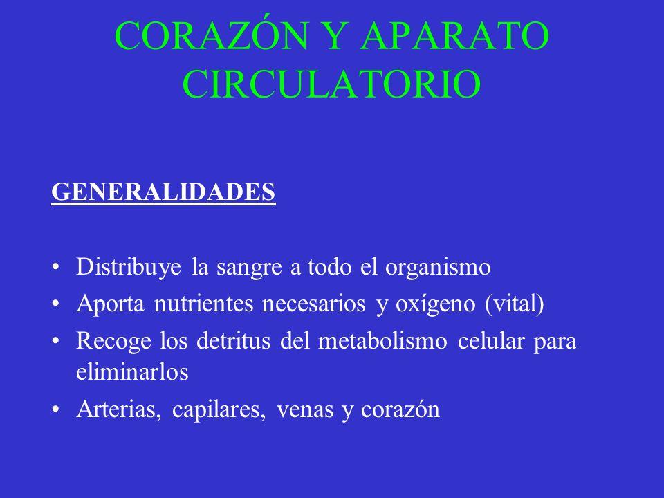 CORAZÓN Y APARATO CIRCULATORIO GENERALIDADES Distribuye la sangre a todo el organismo Aporta nutrientes necesarios y oxígeno (vital) Recoge los detrit