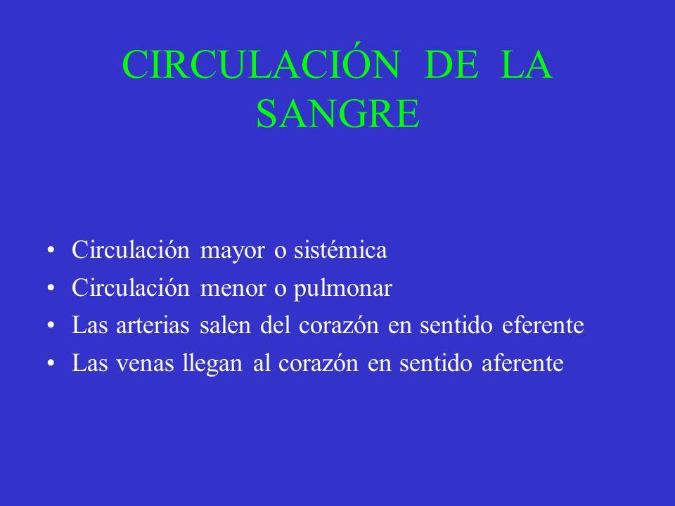 CIRCULACIÓN DE LA SANGRE Circulación mayor o sistémica Circulación menor o pulmonar Las arterias salen del corazón en sentido eferente Las venas llega