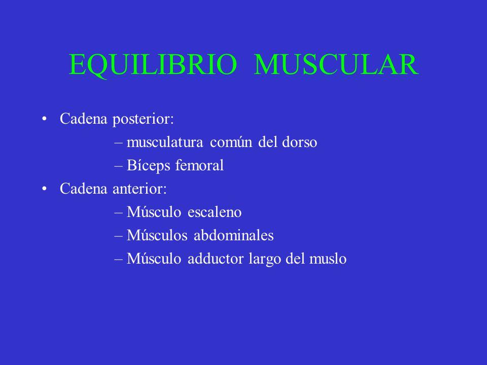 EQUILIBRIO MUSCULAR Cadena posterior: –musculatura común del dorso –Bíceps femoral Cadena anterior: –Músculo escaleno –Músculos abdominales –Músculo a