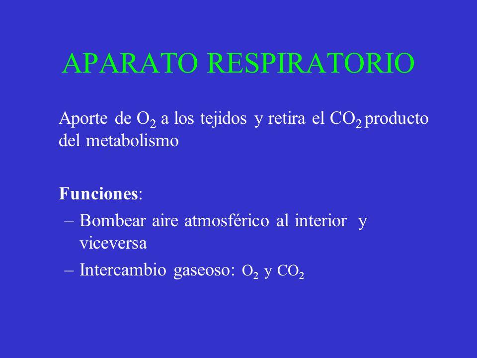 APARATO RESPIRATORIO Aporte de O 2 a los tejidos y retira el CO 2 producto del metabolismo Funciones: –Bombear aire atmosférico al interior y vicevers