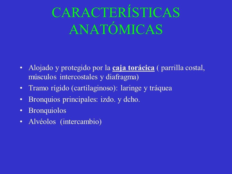 CARACTERÍSTICAS ANATÓMICAS Alojado y protegido por la caja torácica ( parrilla costal, músculos intercostales y diafragma) Tramo rígido (cartilaginoso
