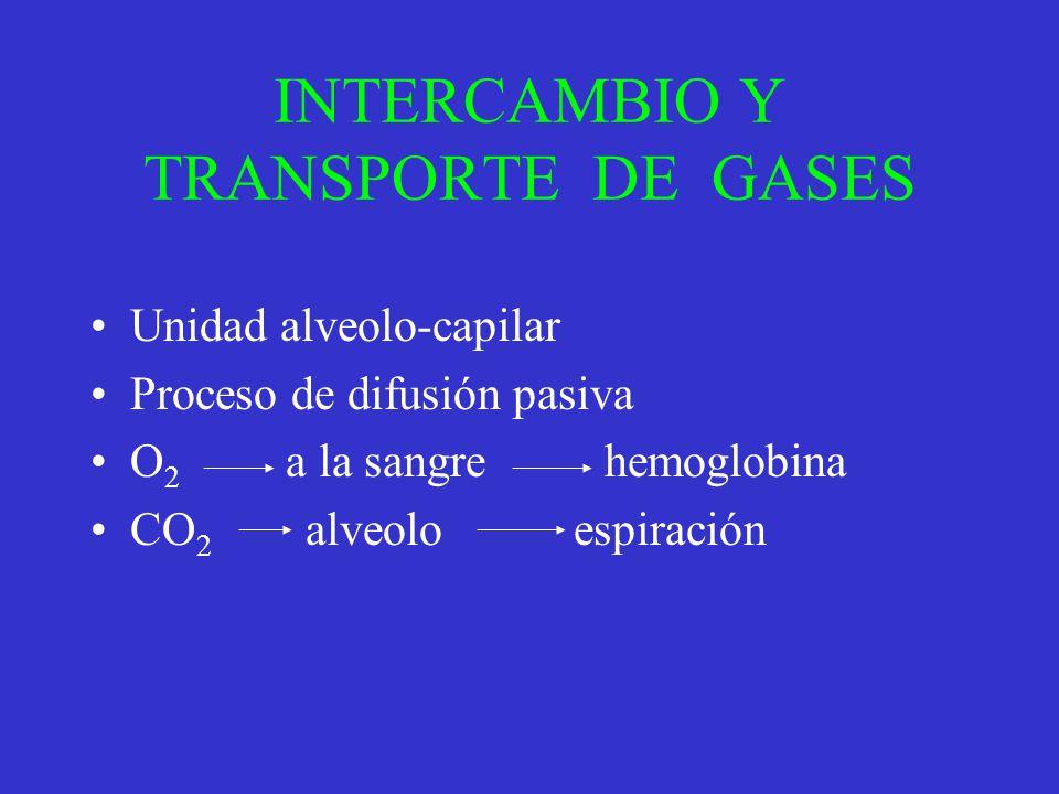 INTERCAMBIO Y TRANSPORTE DE GASES Unidad alveolo-capilar Proceso de difusión pasiva O 2 a la sangre hemoglobina CO 2 alveolo espiración