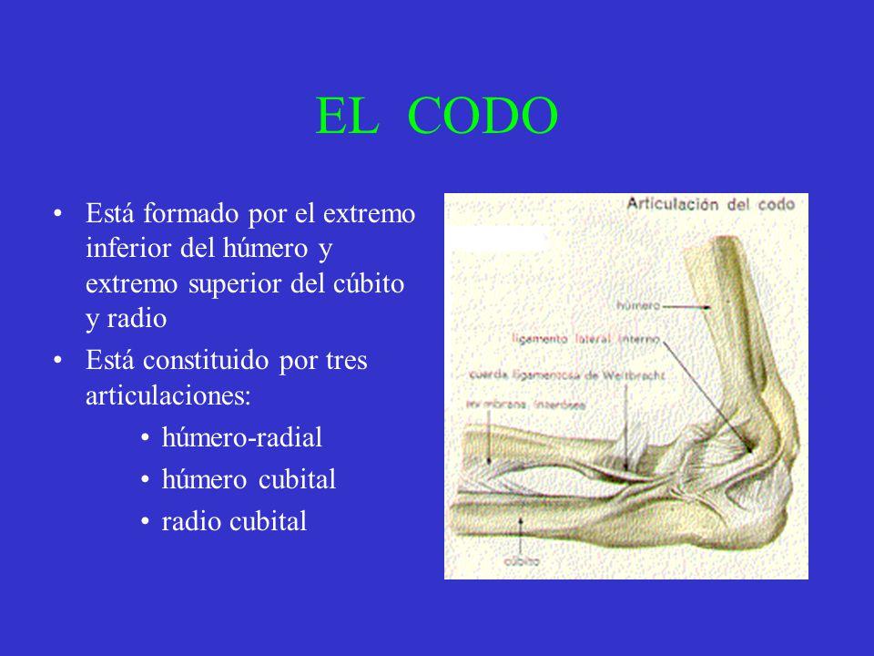 EL CODO Está formado por el extremo inferior del húmero y extremo superior del cúbito y radio Está constituido por tres articulaciones: húmero-radial