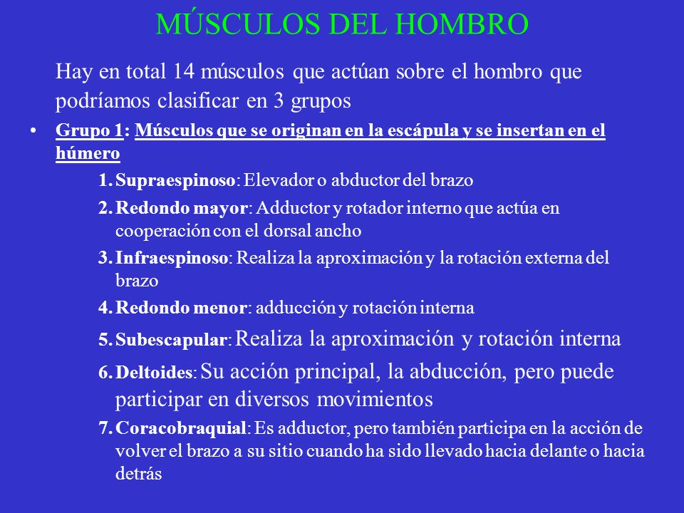 MÚSCULOS DEL HOMBRO Hay en total 14 músculos que actúan sobre el hombro que podríamos clasificar en 3 grupos Grupo 1: Músculos que se originan en la e