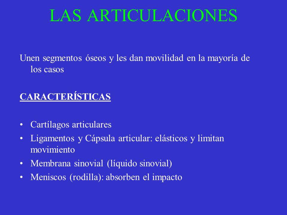 LAS ARTICULACIONES Unen segmentos óseos y les dan movilidad en la mayoría de los casos CARACTERÍSTICAS Cartílagos articulares Ligamentos y Cápsula art
