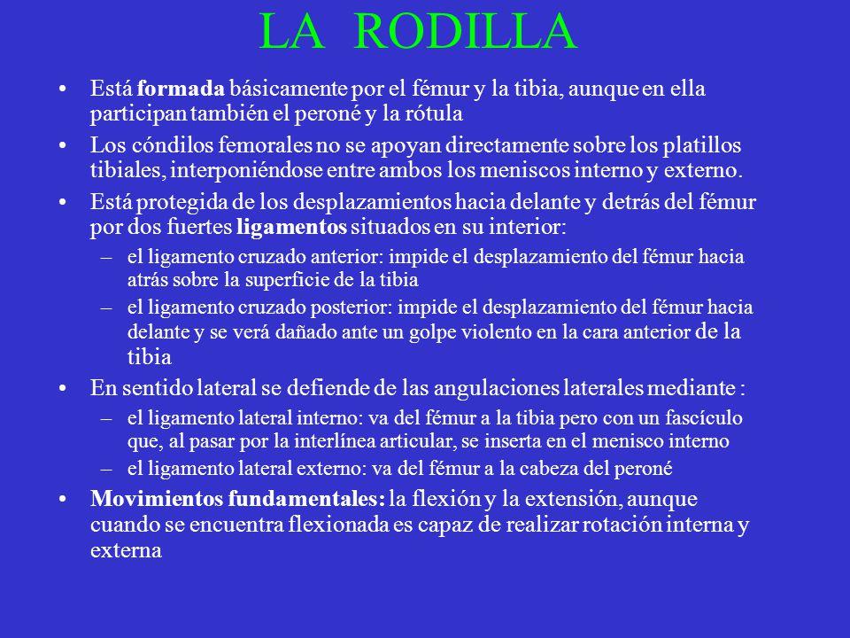 LA RODILLA Está formada básicamente por el fémur y la tibia, aunque en ella participan también el peroné y la rótula Los cóndilos femorales no se apoy