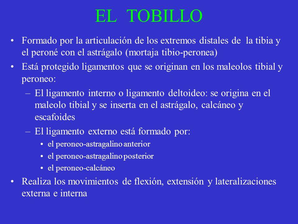 EL TOBILLO Formado por la articulación de los extremos distales de la tibia y el peroné con el astrágalo (mortaja tibio-peronea) Está protegido ligame