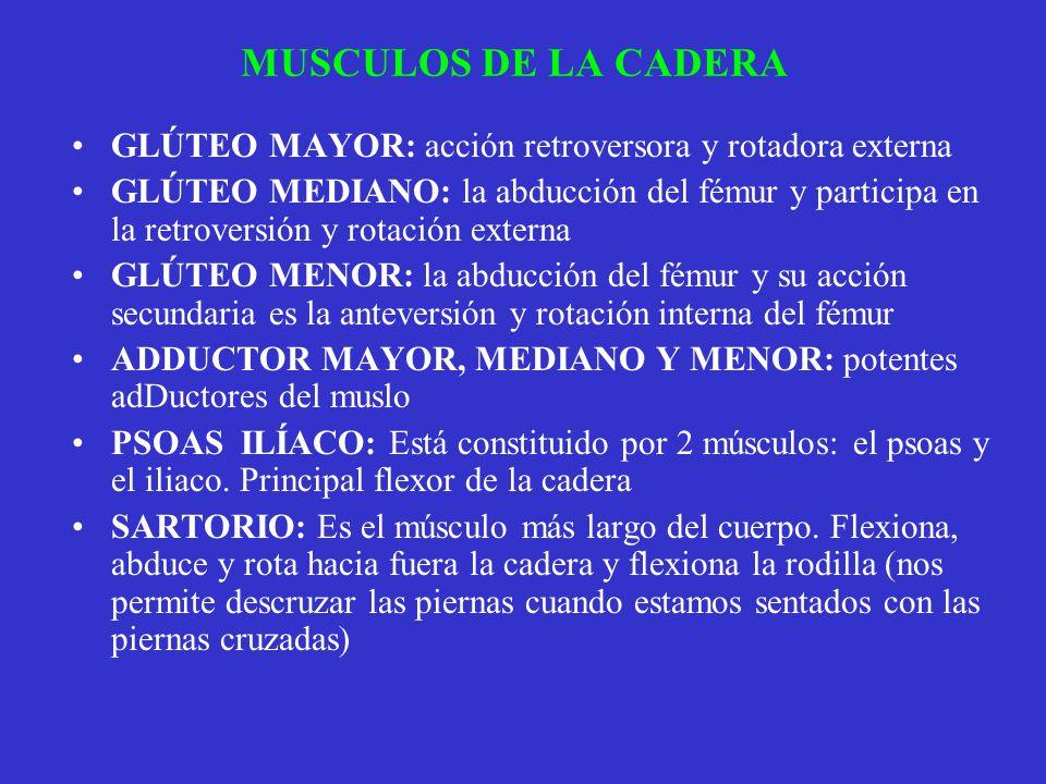 MUSCULOS DE LA CADERA GLÚTEO MAYOR: acción retroversora y rotadora externa GLÚTEO MEDIANO: la abducción del fémur y participa en la retroversión y rot