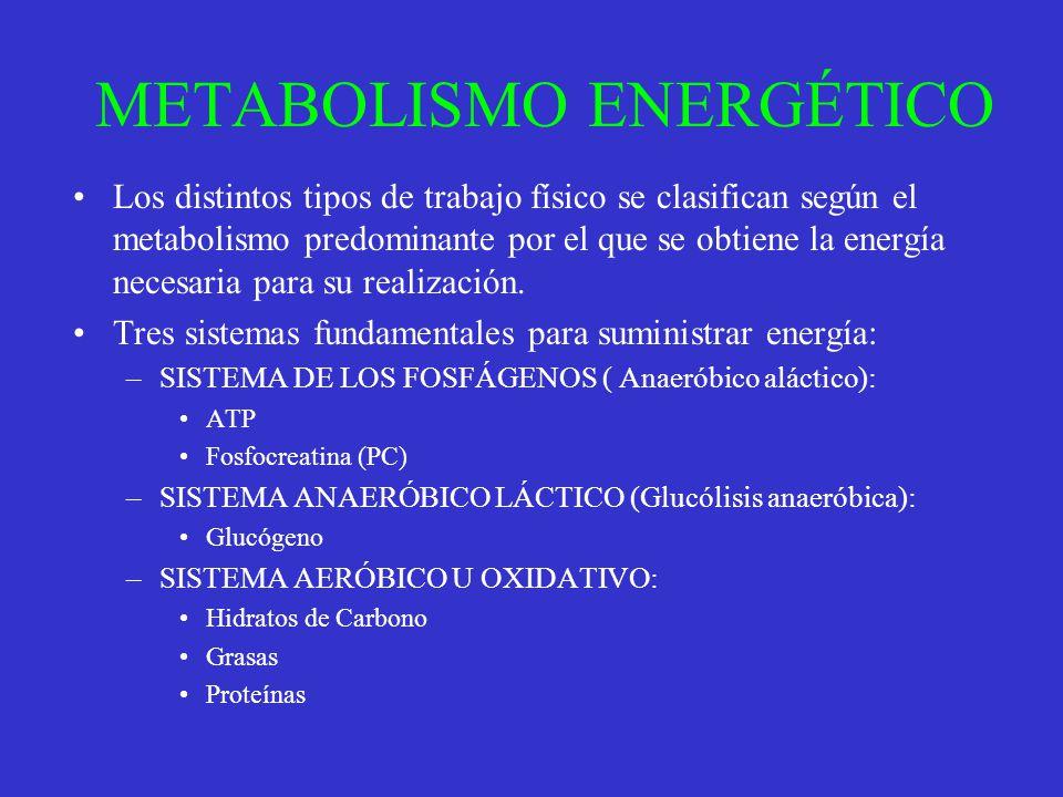 METABOLISMO ENERGÉTICO Los distintos tipos de trabajo físico se clasifican según el metabolismo predominante por el que se obtiene la energía necesari