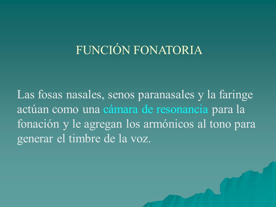 FUNCIÓN FONATORIA Las fosas nasales, senos paranasales y la faringe actúan como una cámara de resonancia para la fonación y le agregan los armónicos a