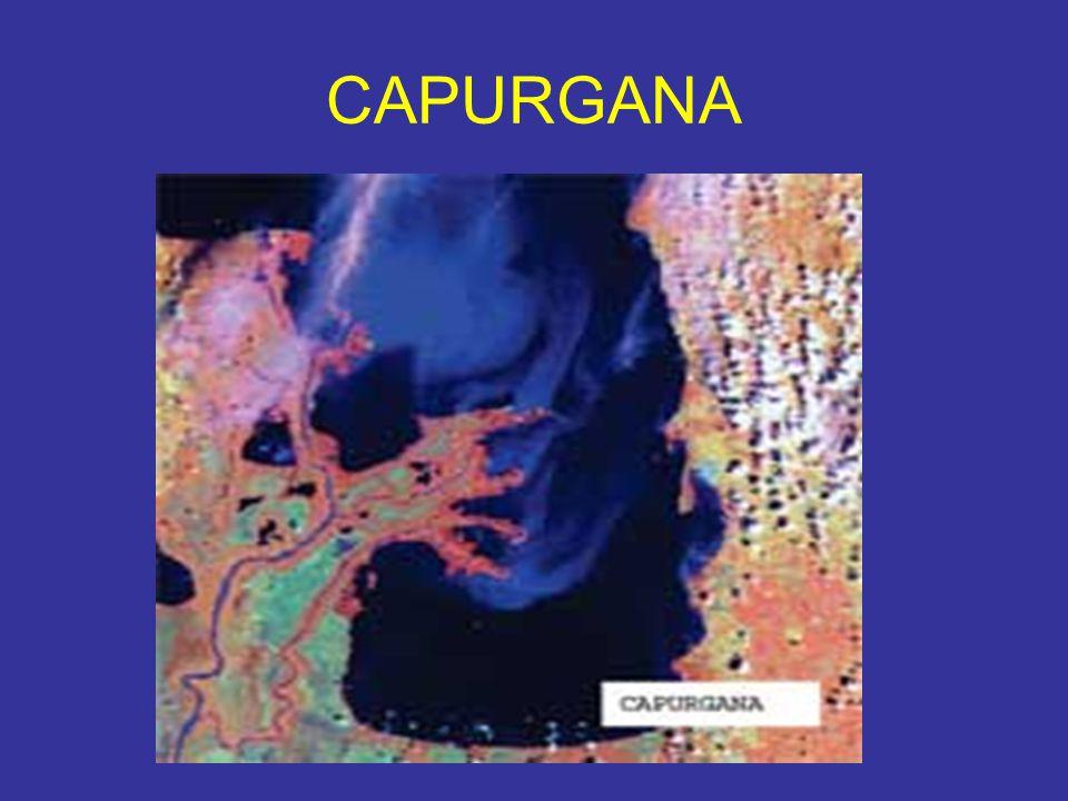 CAPURGANA