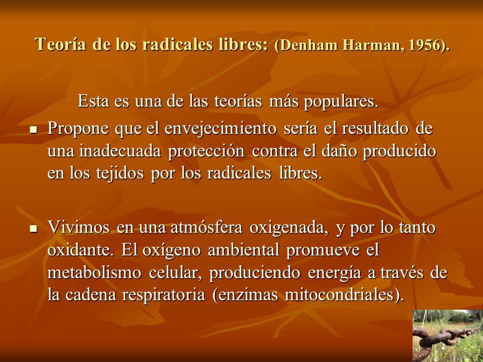 Teoría de los radicales libres: (Denham Harman, 1956). Esta es una de las teorías más populares. Propone que el envejecimiento sería el resultado de u