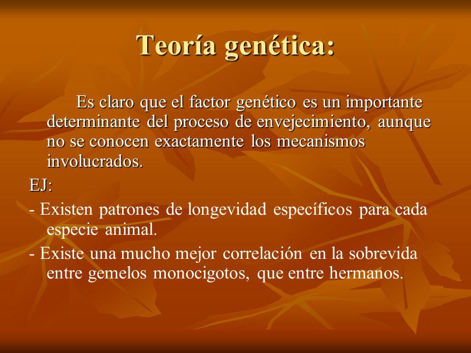 Teoría genética: Es claro que el factor genético es un importante determinante del proceso de envejecimiento, aunque no se conocen exactamente los mec