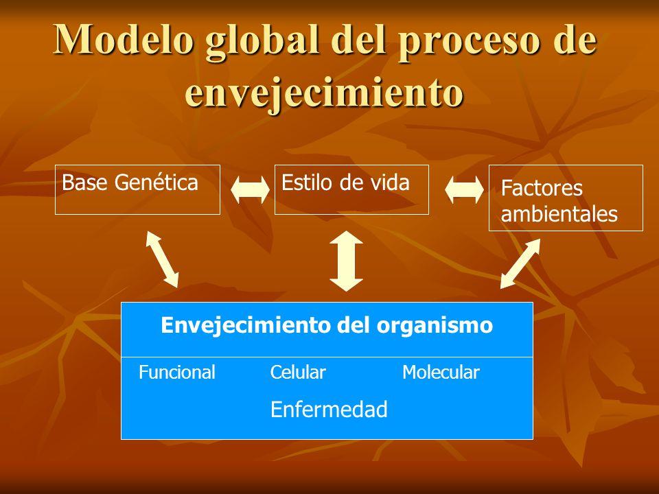 Modelo global del proceso de envejecimiento Base GenéticaEstilo de vida Factores ambientales Envejecimiento del organismo FuncionalCelularMolecular En