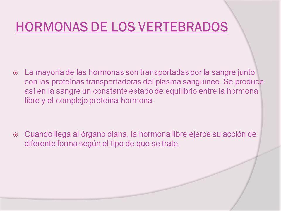 HORMONAS DE LOS VERTEBRADOS La mayoría de las hormonas son transportadas por la sangre junto con las proteínas transportadoras del plasma sanguíneo. S