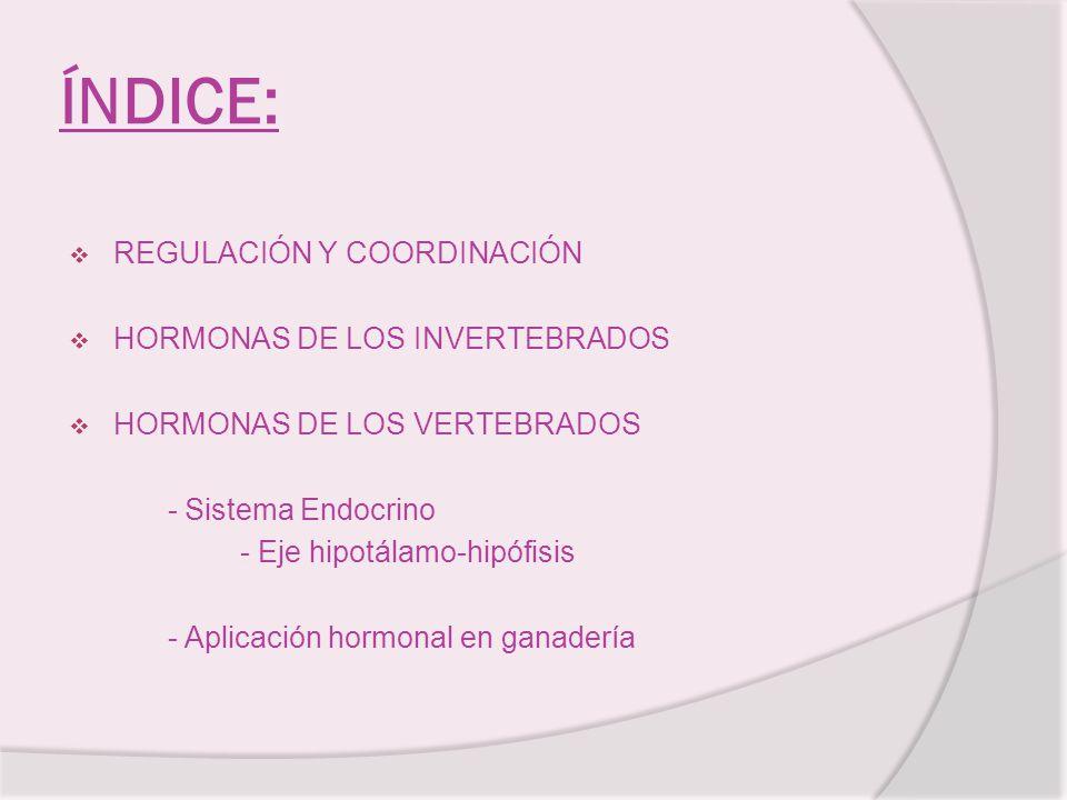 ÍNDICE: REGULACIÓN Y COORDINACIÓN HORMONAS DE LOS INVERTEBRADOS HORMONAS DE LOS VERTEBRADOS - Sistema Endocrino - Eje hipotálamo-hipófisis - Aplicació