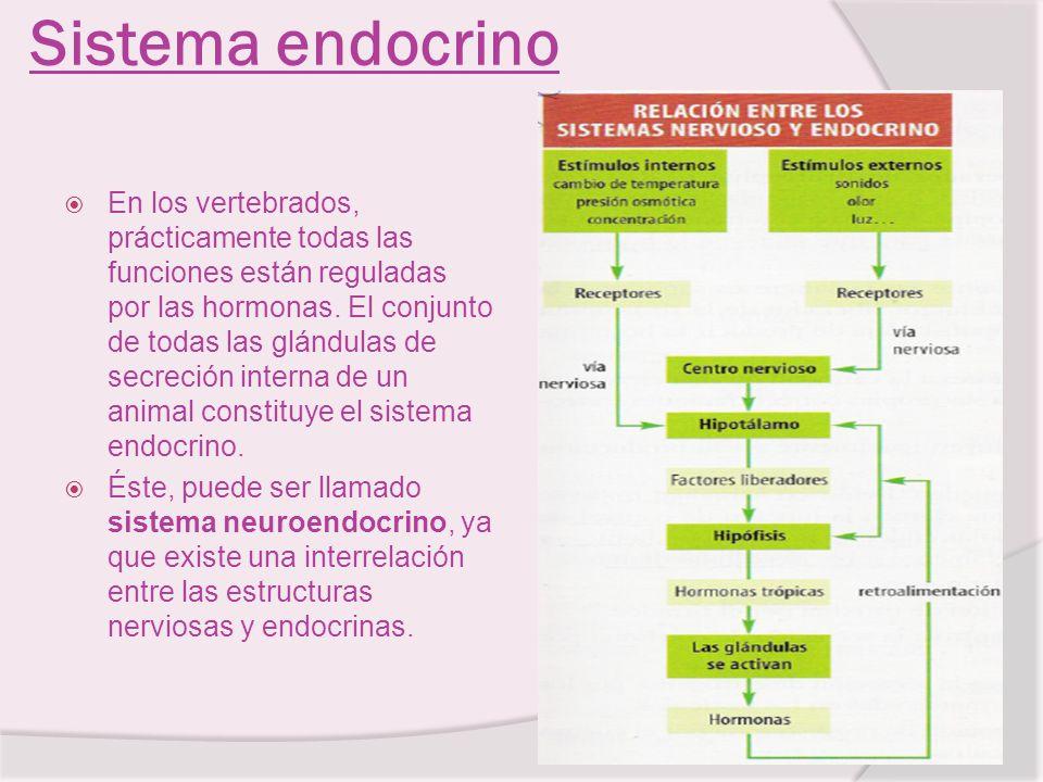 Sistema endocrino En los vertebrados, prácticamente todas las funciones están reguladas por las hormonas. El conjunto de todas las glándulas de secrec