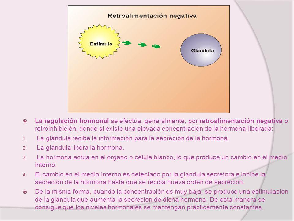 La regulación hormonal se efectúa, generalmente, por retroalimentación negativa o retroinhibición, donde si existe una elevada concentración de la hor