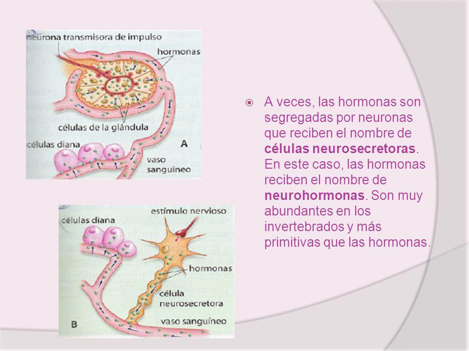 A veces, las hormonas son segregadas por neuronas que reciben el nombre de células neurosecretoras. En este caso, las hormonas reciben el nombre de ne