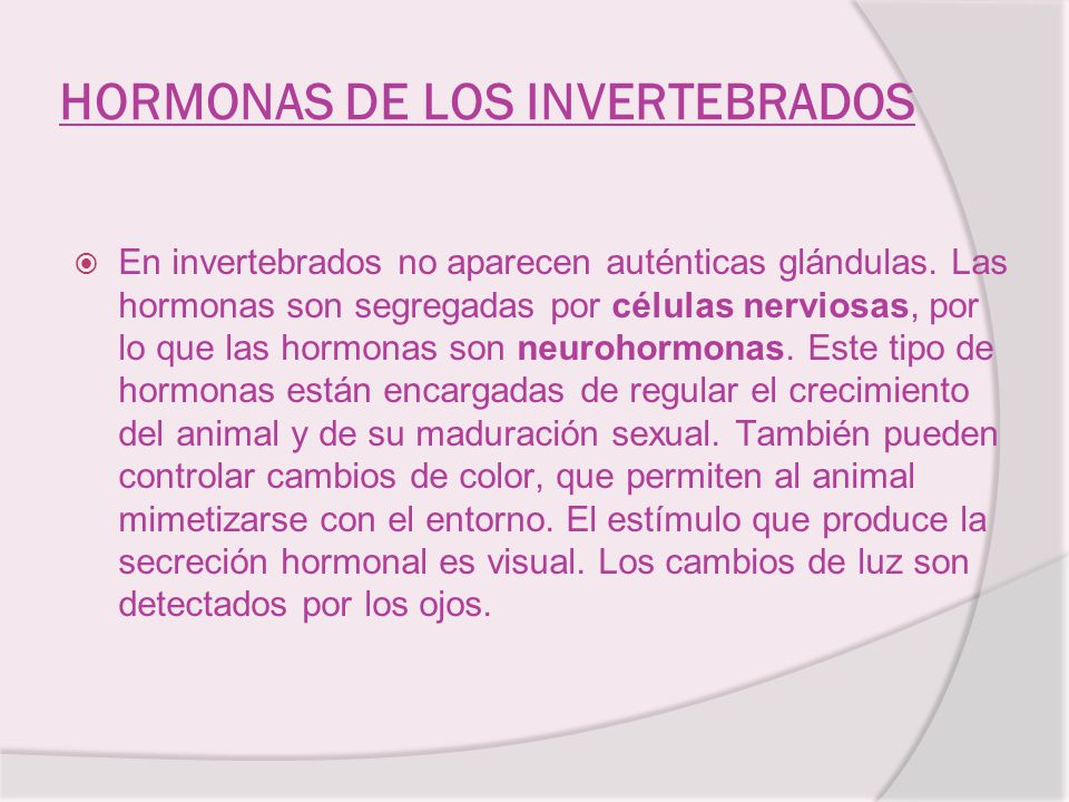HORMONAS DE LOS INVERTEBRADOS En invertebrados no aparecen auténticas glándulas. Las hormonas son segregadas por células nerviosas, por lo que las hor