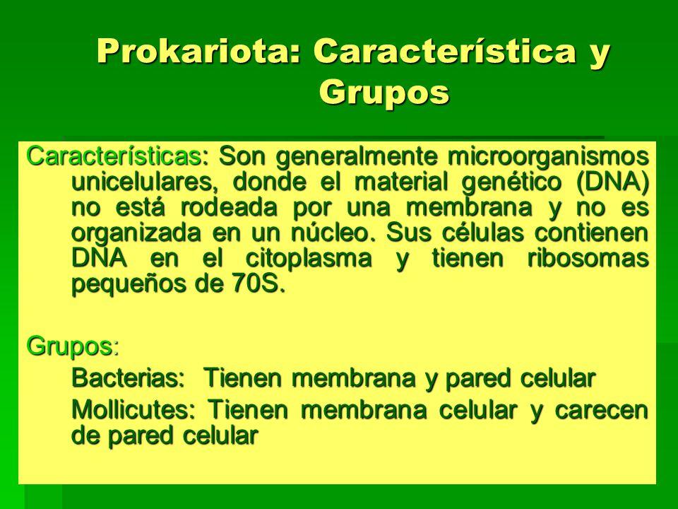 Prokariota: Característica y Grupos Características: Son generalmente microorganismos unicelulares, donde el material genético (DNA) no está rodeada p