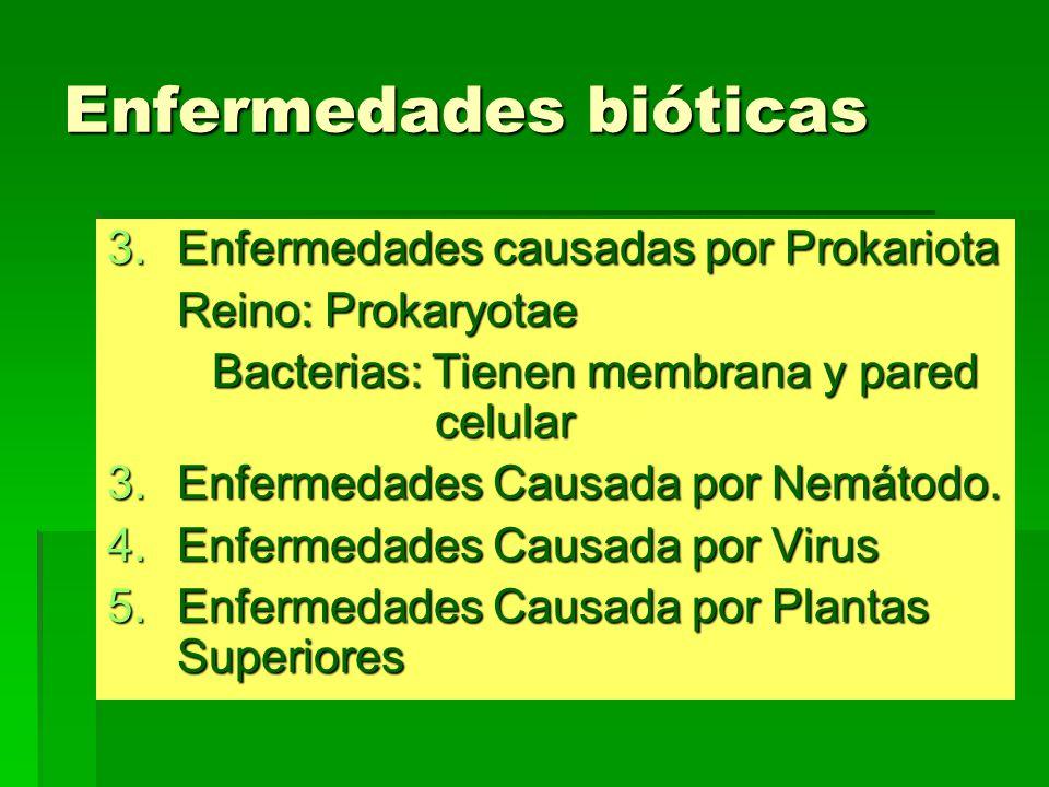 Enfermedades bióticas 3.Enfermedades causadas por Prokariota Reino: Prokaryotae Bacterias: Tienen membrana y pared celular 3.Enfermedades Causada por