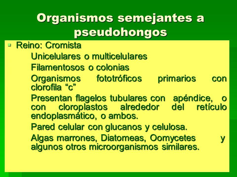 Organismos semejantes a pseudohongos Reino: Cromista Reino: Cromista Unicelulares o multicelulares Filamentosos o colonias Organismos fototróficos pri