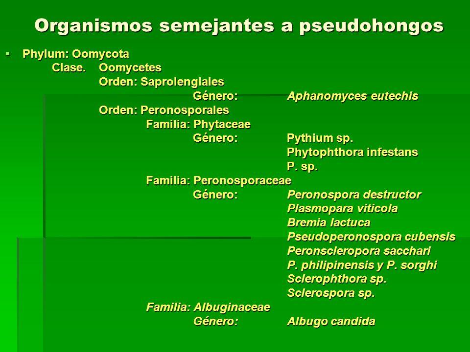 Organismos semejantes a pseudohongos Phylum: Oomycota Phylum: Oomycota Clase.Oomycetes Orden: Saprolengiales Género: Aphanomyces eutechis Orden: Peron