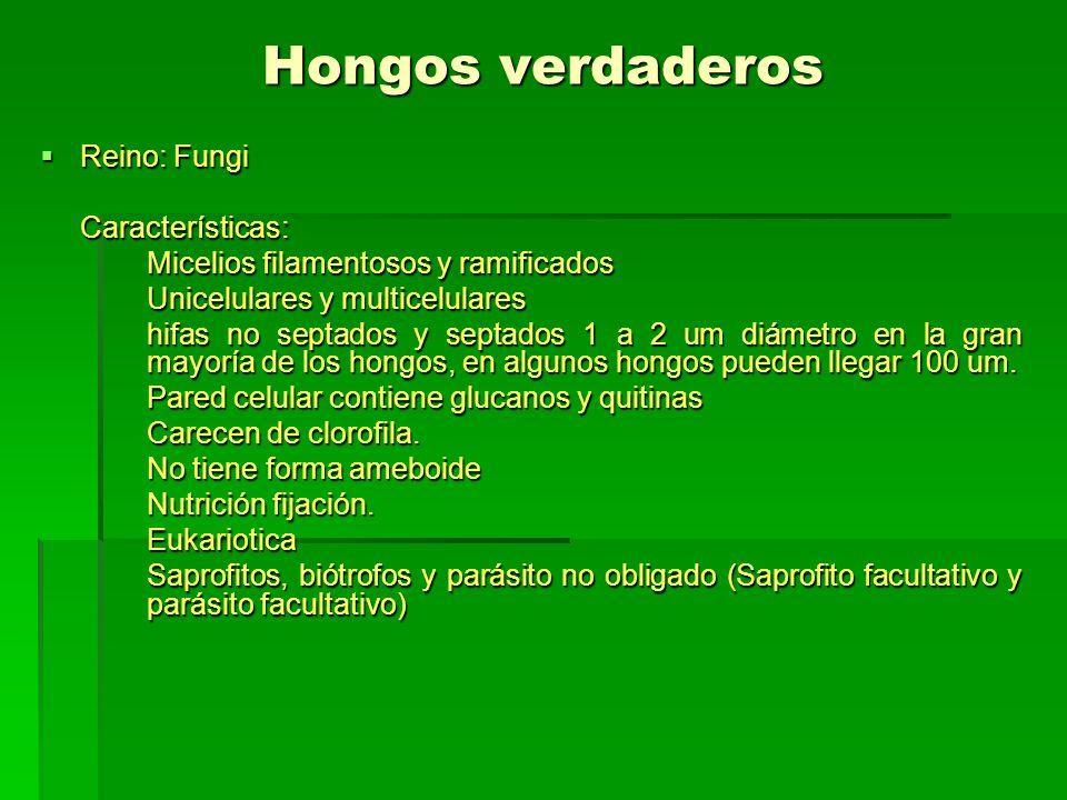 Hongos verdaderos Reino: Fungi Reino: FungiCaracterísticas: Micelios filamentosos y ramificados Unicelulares y multicelulares hifas no septados y sept