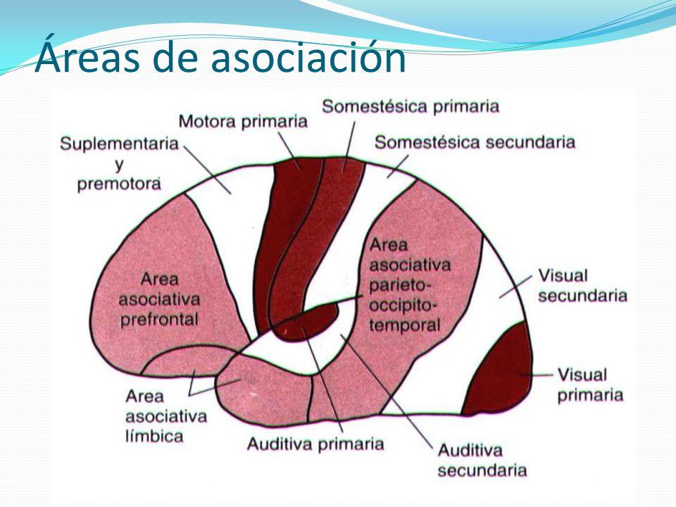Áreas de asociación