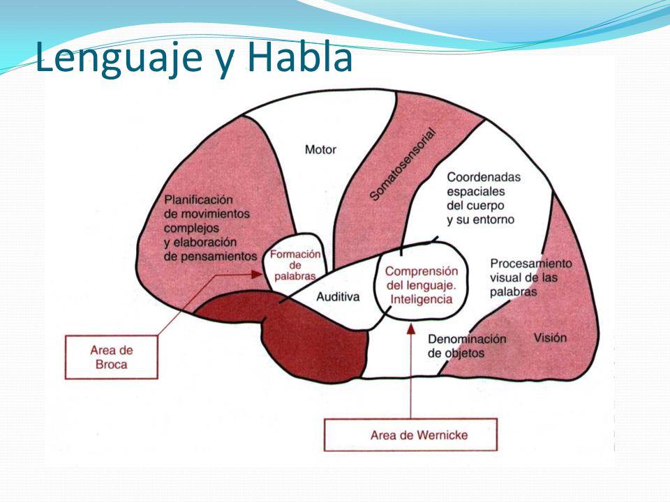 Lenguaje y Habla