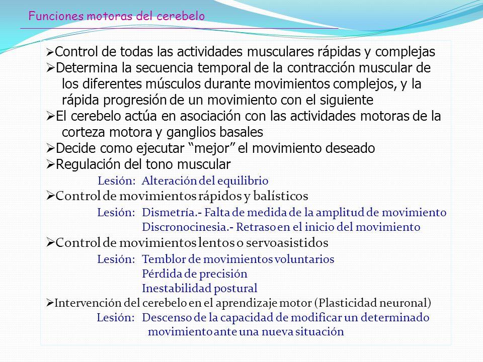 Funciones motoras del cerebelo Control de todas las actividades musculares rápidas y complejas Determina la secuencia temporal de la contracción muscu