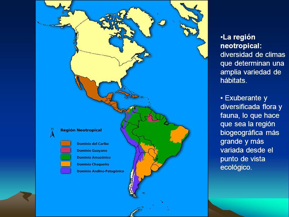 La región neotropical: diversidad de climas que determinan una amplia variedad de hábitats. Exuberante y diversificada flora y fauna, lo que hace que