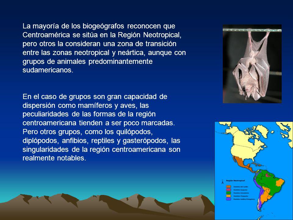 La mayoría de los biogeógrafos reconocen que Centroamérica se sitúa en la Región Neotropical, pero otros la consideran una zona de transición entre la