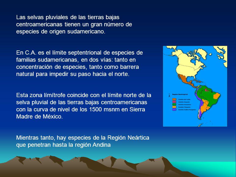 Las selvas pluviales de las tierras bajas centroamericanas tienen un gran número de especies de origen sudamericano. En C.A. es el límite septentriona